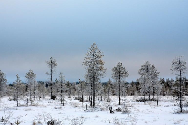 Kuviasuomesta talvi