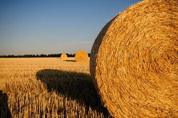Optimoi maatilan sähkönkäytönkustannuks sopivalla sähkösopimuksella | PKS Priimaplus